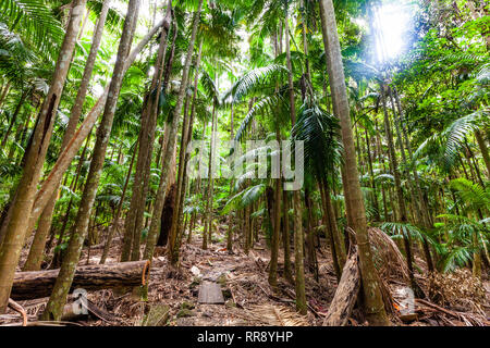 Lush green temperate rainforest in Australia - Stock Photo