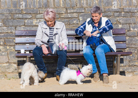 Bournemouth, Dorset, UK. 25th Feb, 2019. UK weather: another lovely warm sunny day at Bournemouth as visitors enjoy the sunshine at the beach on the hottest day of the year so far and hottest February day ever. Two women sitting on bench with dogs. Credit: Carolyn Jenkins/Alamy Live News