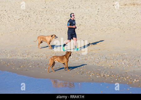 Bournemouth, Dorset, UK. 25th Feb, 2019. UK weather: another lovely warm sunny day at Bournemouth as visitors enjoy the sunshine at the beach on the hottest day of the year so far and hottest February day ever. Man running along seashore with dogs. Credit: Carolyn Jenkins/Alamy Live News - Stock Photo