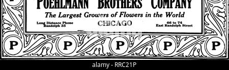 """. Florists' review [microform]. Floriculture. ^ .^ ''Complete Service for Florists' ST. PATRICK'S DAY, March 17th Green Ruscus Painted 75c lb. Pampas Plumes Green Dyed $2.00 lb. Frieze Green Dyed ii-iiich, 75c bolt Astral Ferns Large Leaves, per bunch of 25, $2.50 Ribbon Pattern 4200, No. 5 Emerald Green Satin Ribbon, 50-yard piece... .$2.50 'Toehlmann Special"""" Green Florists' Thread per lib. box. .$1.25 Silk Fiber Ribbon Nile, Moss, White, Lavender, Scarlet and Pink— 1-inch $1.75 bolt 2 inch 3.50 bolt Carnation Dye Green, small pkt $1.00 Green, large pkt 2.00 Ribbonzene Emerald Green $1"""