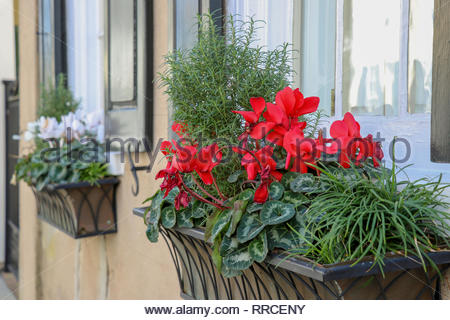 window boxes planted with rosemary and blooming cyclamen on a street in the historic district of Charleston, South Carolina - Stock Photo