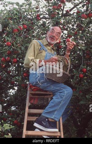 Löwenzahn - Peter (PETER LUSTIG) steht auf der Leiter und erntet Äpfel, als plötzlich ein unbekanntes Flugobjekt im Apfelbaum hängenbleibt. Regie: Hannes Spring, Wolfgang Teichert aka. Drachen fliegen / Überschrift: LÖWENZAHN / BRD 1998 - Stock Photo