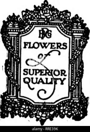 . Florists' review [microform]. Floriculture. 1 9 We will have the supply of Christmas on the Great Central Prices Published. POEHLMANN BrO 66 to 74 East TELEPHONE CHICAGO,. Please note that these images are extracted from scanned page images that may have been digitally enhanced for readability - coloration and appearance of these illustrations may not perfectly resemble the original work.. Chicago : Florists' Pub. Co - Stock Photo
