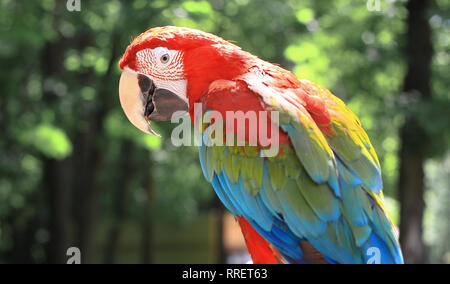 close up. parrot macaw sitting on a branch - Stock Photo