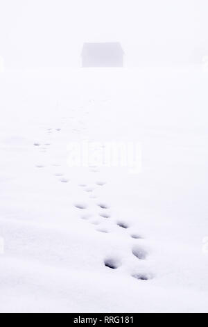Footprints of wild animal to the feed hut in a snowy field in the fog in Styria, Austria - Stock Photo