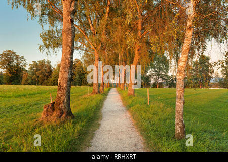 Tree alley at sunset near Uffing, Staffelsee Lake, Blaues Land, Upper Bavaria, Bavaria, Germany, Europe - Stock Photo