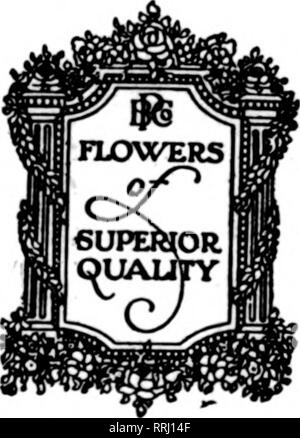 """. Florists' review [microform]. Floriculture. Nature's Si WE OFFER SU CATTLEY Choice - - Large Specimen Blooms Buy Safely Buy """"Flowers of Complete Servia POEHLMANN BrO 66 to 74 East CHICAGO,. Please note that these images are extracted from scanned page images that may have been digitally enhanced for readability - coloration and appearance of these illustrations may not perfectly resemble the original work.. Chicago : Florists' Pub. Co - Stock Photo"""