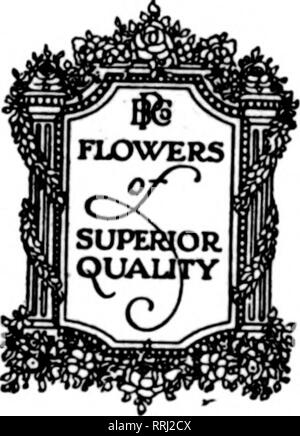 """. Florists' review [microform]. Floriculture. Prices Published. """"The Nation's Most POEHLMANN BRO 66 to 74 East CHICAGO,. Please note that these images are extracted from scanned page images that may have been digitally enhanced for readability - coloration and appearance of these illustrations may not perfectly resemble the original work.. Chicago : Florists' Pub. Co - Stock Photo"""