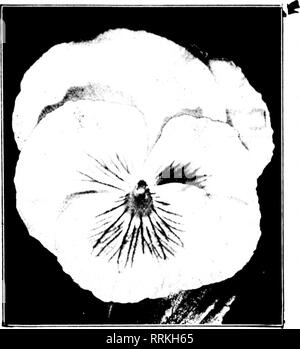 . Florists' review [microform]. Floriculture. 52 The Florists'Review July 20, 1!)17.. Please note that these images are extracted from scanned page images that may have been digitally enhanced for readability - coloration and appearance of these illustrations may not perfectly resemble the original work.. Chicago : Florists' Pub. Co - Stock Photo