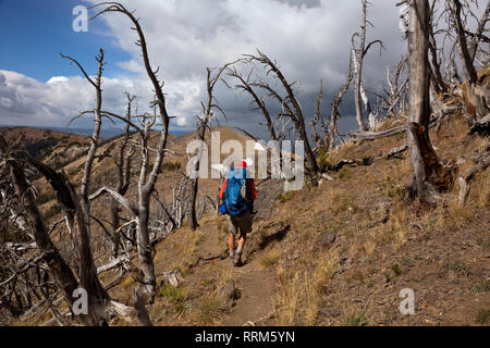 WY03849-00...WYOMING - Hiker descending from the Mount Sheridan Lookout through a forest of ghost trees on a stormy day in Yellowstone National Park. - Stock Photo