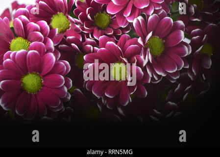 Flowers violet and white in makro - Stock Photo