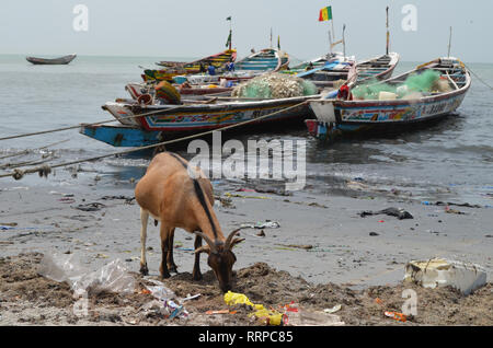 A goat forages for food amongst the litter in a beach on Senegal's Petite Cote, Western Africa - Stock Photo