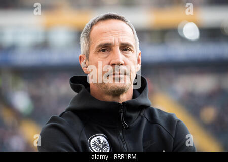 Frankfurt, Deutschland. 17th Feb, 2019. Adi HUETTER (Hvºtter, coach, F), Half-length, Football 1. Bundesliga, 22. matchday, Eintracht Frankfurt (F) - Borussia Monchengladbach (MG) 1: 1, on 17.02.2019 in Frankfurt/Germany. ¬ | usage worldwide Credit: dpa/Alamy Live News - Stock Photo
