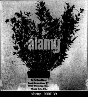 . Florists' review [microform]. Floriculture. 94 The Florists' Review February 25, lOlo.. Please note that these images are extracted from scanned page images that may have been digitally enhanced for readability - coloration and appearance of these illustrations may not perfectly resemble the original work.. Chicago : Florists' Pub. Co - Stock Photo