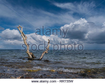 Wide view over the Baltic Sea. In the foreground dead wood rises out of the water with small waves. In the background blue sky and clouds above the ho - Stock Photo