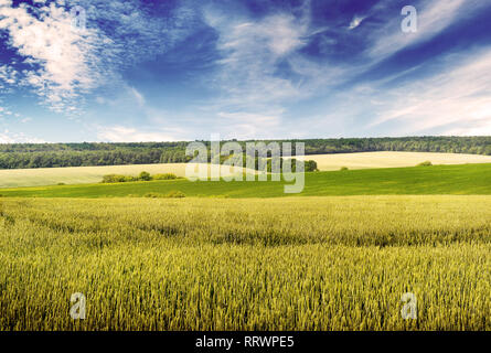 Toned photo wheat field and beautiful blue sky in vintage style - Stock Photo