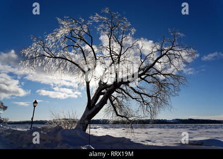 A tree covered in ice after freezing rain glowing in the sun in Quebec, Canada with the St Lawrence river beyond - Stock Photo