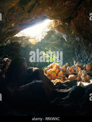 Plant hit by sunlight at Ana Te Pahu Cave - Easter Island, Chile - Stock Photo