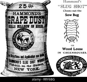 """. Florists' review [microform]. Floriculture. Hammond's """"SLUG SHOT"""" Cleans out the Sow Bug. Sold by the Seed Dealers of America Mentior The Review when you write NO ODOB NO POISON f*^ t^t TfTi ^^;-t^K,SA;?^^^. Please note that these images are extracted from scanned page images that may have been digitally enhanced for readability - coloration and appearance of these illustrations may not perfectly resemble the original work.. Chicago : Florists' Pub. Co - Stock Photo"""