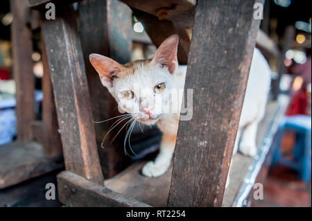 A stray cat or perhaps someones pet sits amongst the stalls of an indoor market in Phnom Penh, Cambodia. - Stock Photo