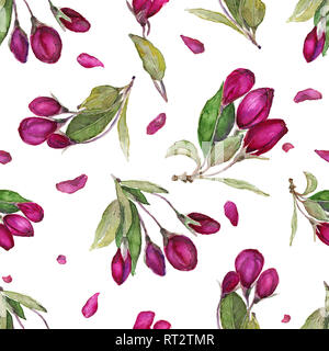 Watercolor seamless floral pattern. Hand drawn blossom apple flowers, isolated on white. - Stock Photo