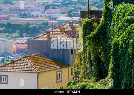 Green plants covered the wall in Porto city, Portugal. - Stock Photo
