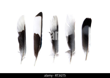 Various feathers isolated on white background - Stock Photo