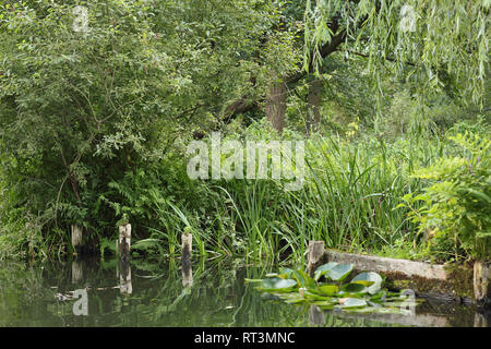Riparian zone of a small stream in the Spreewald - Stock Photo