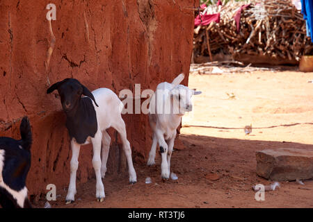 View of an old masai village with huts of clay. Kid or goat and poverty and misery in Kenya in Africa - Stock Photo