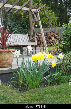 Yellow and white daffodils in a garden border in front of a patio with a swing bench - Stock Photo