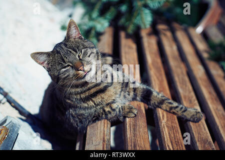 A gray cat sits on a wooden bench near the house.Cute gray cat sitting on a wooden bench outdoors - Stock Photo