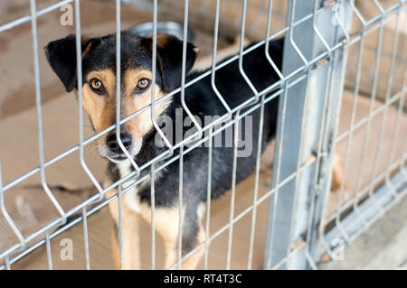 portrait of a dog in a shelter cage, animal shelter, dog rescue, volunteer work - Stock Photo