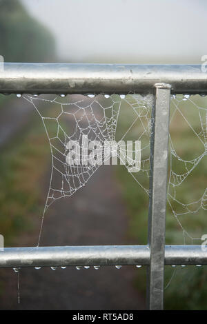 Cobweb spun on a metal gate, first thing in the morning it is covered in dew drops on a misty autumnal morning in England - Stock Photo