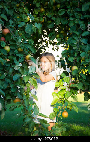 Portrait of smiling little girl picking apple from tree - Stock Photo