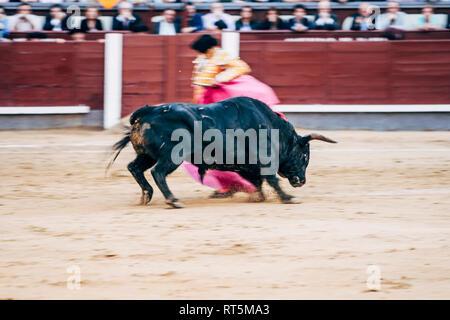 Bullfighting, torero and bull - Stock Photo
