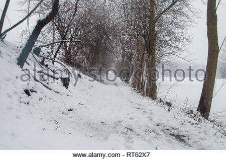Snowy road in the woods - Stock Photo