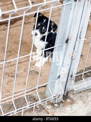 puppy Peeps out of the cage house shelter, animal shelter, dog rescue, volunteer work - Stock Photo