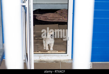 beautiful puppy peeking out of the house in the shelter, animal shelter, dog rescue, volunteer work - Stock Photo