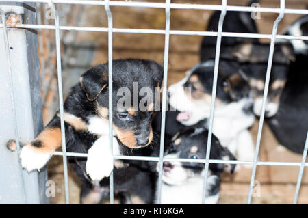 beautiful puppy looking out of the barrier in the shelter, animal shelter, dog rescue, volunteer work - Stock Photo