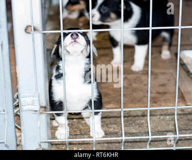 a puppy peeks out from behind the bars of the shelter, animal shelter, dog rescue, volunteer work - Stock Photo