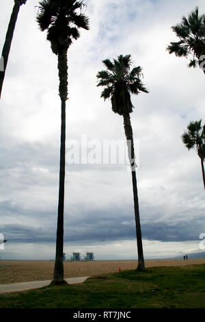 Palm trees in Venice beach, Los Angeles - Stock Photo