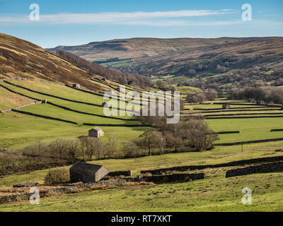 Swaledale in the Yorkshire Dales National Park Its upper parts are particularly striking because of its large old limestone field barns , stone walls  - Stock Photo