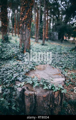 A cut tree in a forest - Stock Photo