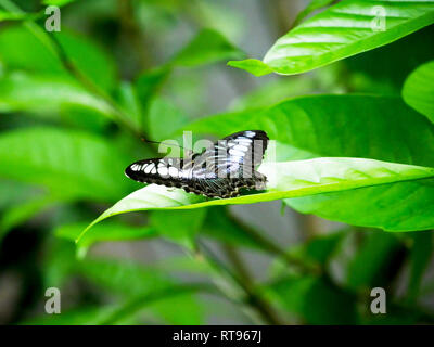 Butterfly on leaf - Stock Photo