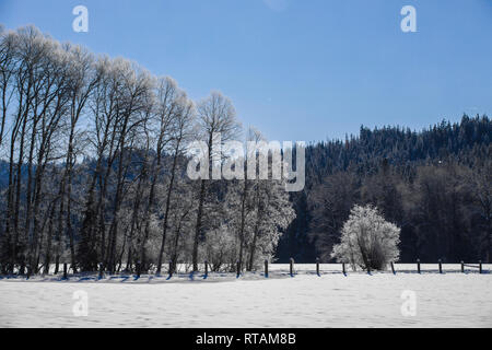 Frost covered trees in a snowy field near Coeur d'Alene, Idaho. - Stock Photo