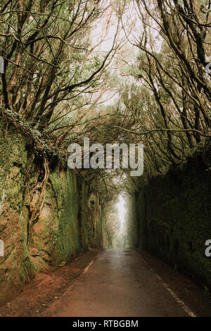 Footpath between murk alley of high walls and woods - Stock Photo
