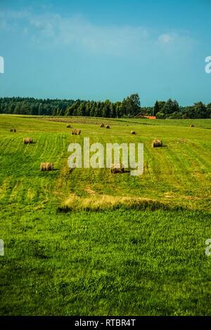 Summer scene of hay rolls in Latvia. - Stock Photo