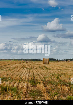 Hay rolls on a harvested crop field in Latvia. - Stock Photo