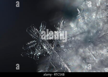 Macro photograph of freshly fallen snowflakes on a cold winter day. - Stock Photo