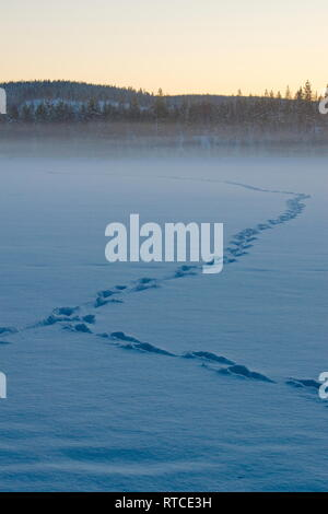 Animal tracks are leading through the snow covering a frozen lake at dusk. - Stock Photo